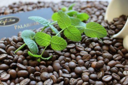 Kawa smakowa aromatyzowana miętowa
