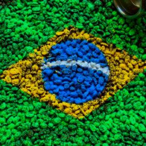 Najwyższej jakości świeżo palona Arabika Brazylia Santos