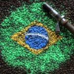 Brazylia Yellow Burbon