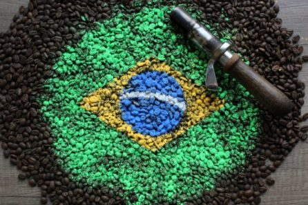 Najwyższej jakości świeżo palona Arabika Brazylia Yellow Burbon