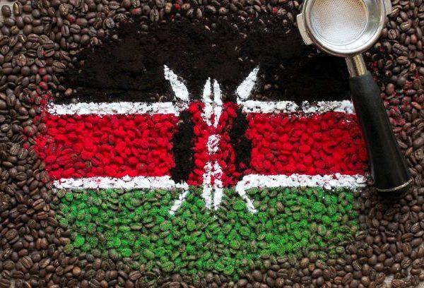 Najwyższej jakości świeżo palona arabika Kenia AA+