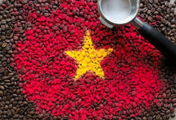 Najwyższej jakości świeżo palona robusta Vietnam