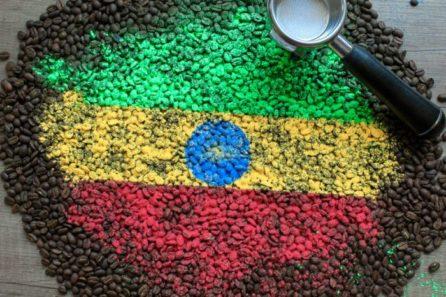 Arabika Etiopia Djimmah Cafe Ina